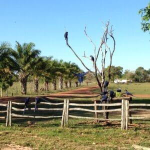 pantanal_bresil_pousada_aguape_aras_bleus