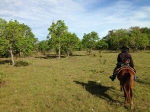 pantanal_bresil_randonne_cheval