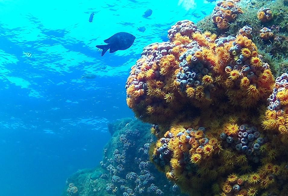 Plongée découverte à Rio de Janeiro – Angra dos Reis