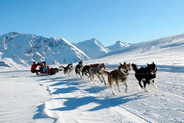 Balade en chiens de traineau en montagne -activité insolite en station de ski