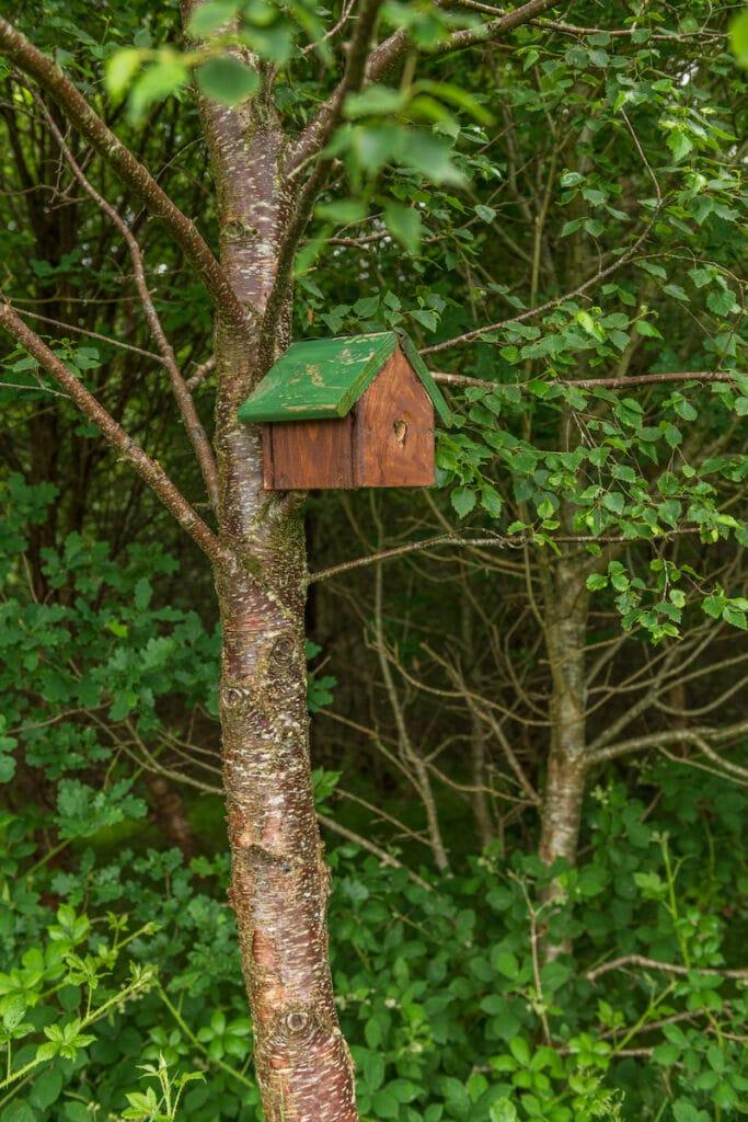 celtic_titles_maison_oiseau